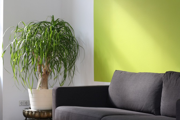 Plant life brings nature into the home