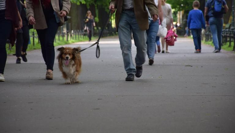 Dog in the Planty Park | © LiveKrakow.com
