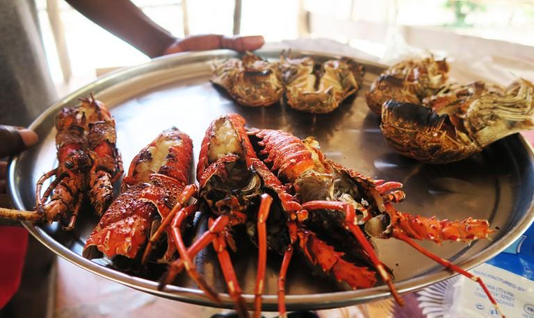 Indian Ocean Lobster