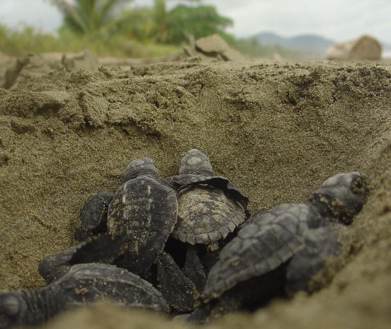 Sweet sea turtle babies © Brad Flickinger/Flickr