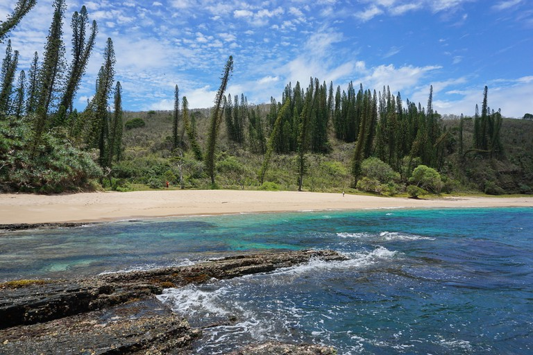 Endemic pines at Turtle Bay, New Caledonia | © Seaphotoart / Shutterstock