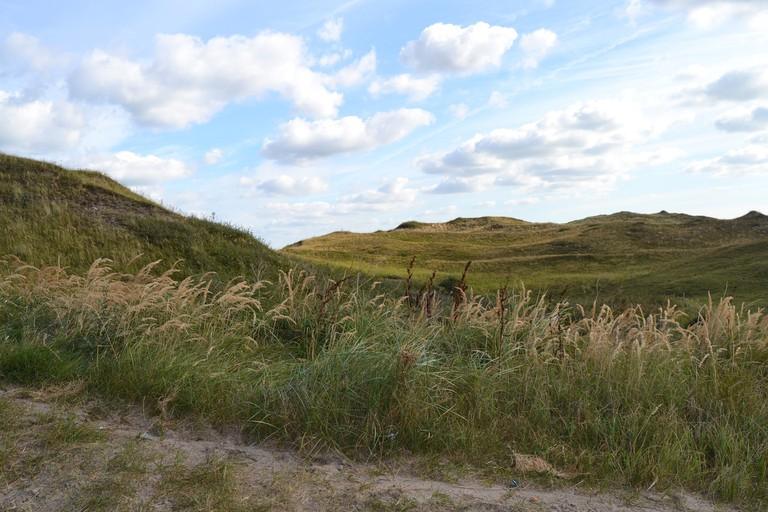 Texel's dunes | © pixabay