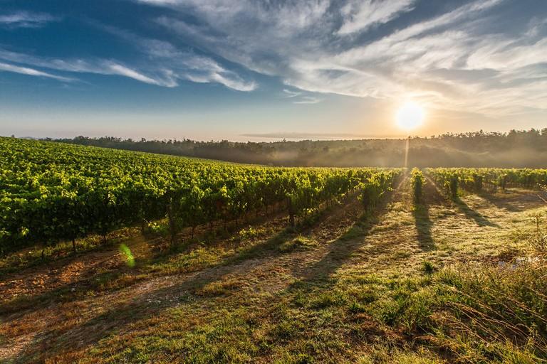 Rolling farm land | © alohamalakhov/Pixabay