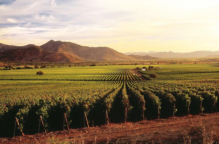 Vineyards| © Viña Caliterra/Flickr