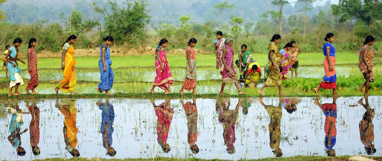 Women working in the rice paddy fields in Odisha, India | © Trocaire/Flickr