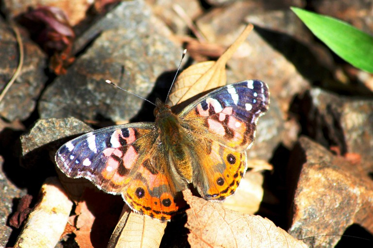 Check out Paraguay's butterflies I