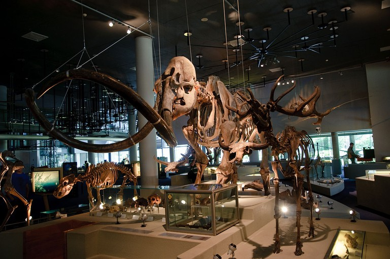 A woolly mammoth skeleton at Naturalis Biodiversity Center