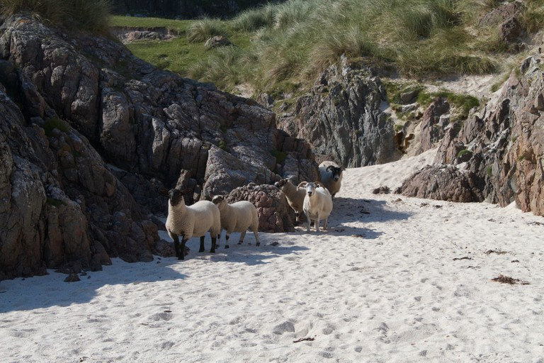 Iona Beach (like the golf course, they may have to be shared with sheep!)