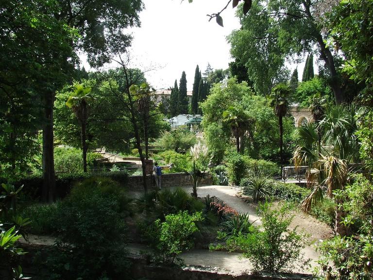 Jardin des Plantes   © Peter / Flickr