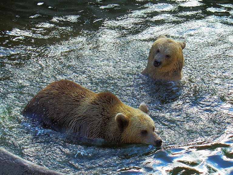 The Eurasian brown bears at the Helsinki Zoo/ ZeroOne/ Flickr