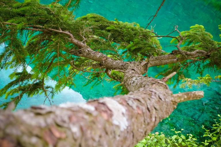 Trees by the Grüner See | © Roman Königshofer/Flickr