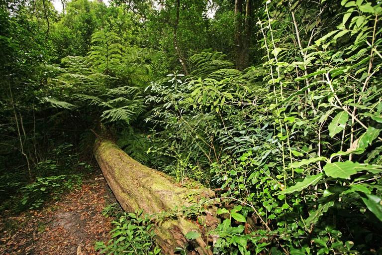 Knysna Forest – Garden Route, South Africa