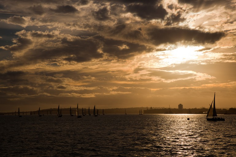 Yachts on the Waitemata Harbour