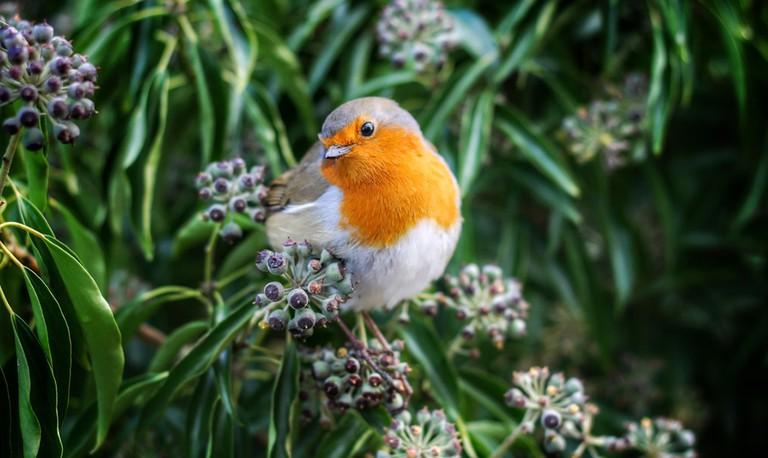 Bird | © Andrew Alexander / Unsplash
