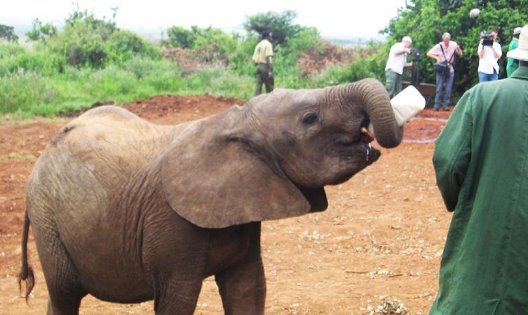 Baby Elephant│© Valentina Buj/ Flickr