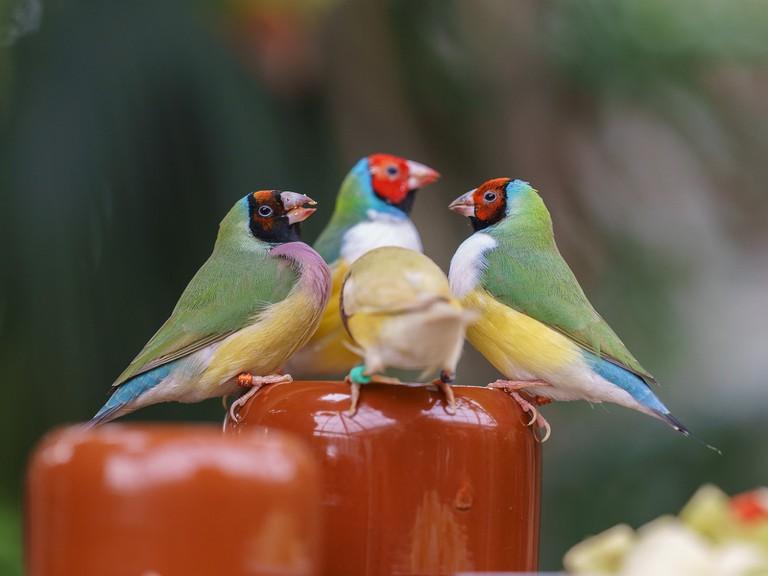 Birds in Costa Rica | © Arend / Flickr
