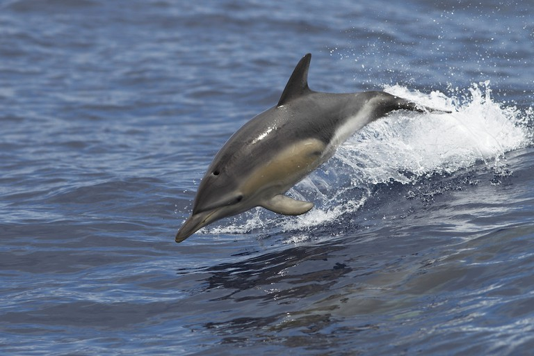 Dolphin sightings are very common on Isla San Lucas