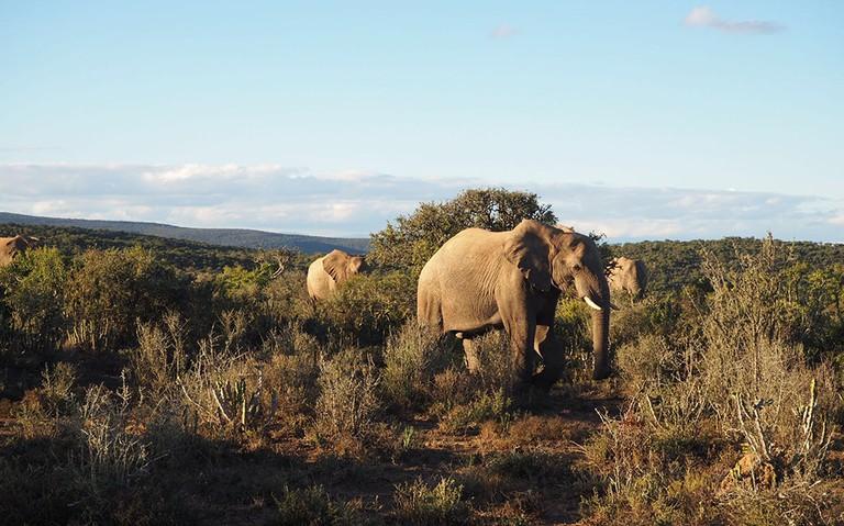 A herd of elephants moves through the bushveld