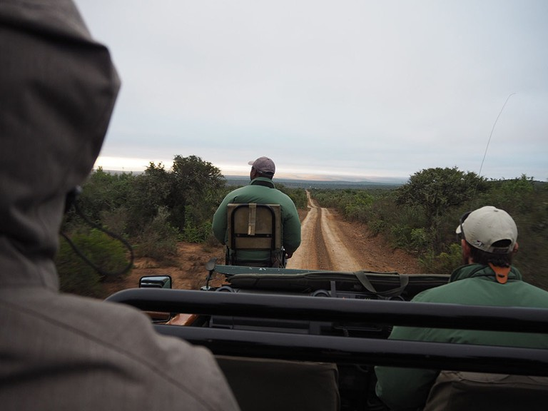 One of Kwandwe's customised jeeps rolls through the reserve