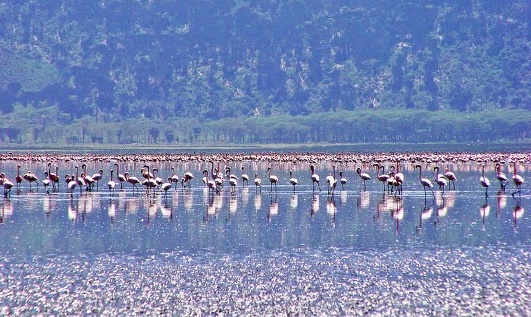 Flamingoes | © Tambako The Jaguar / Flickr