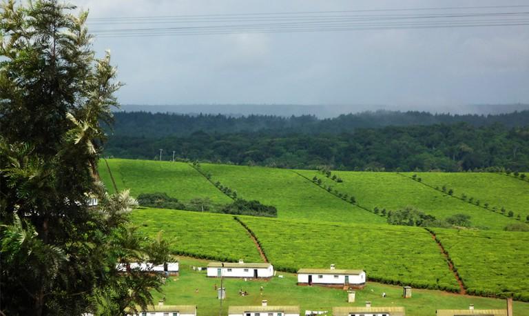 Kericho tea farms | © Victor Ochieng /Flickr