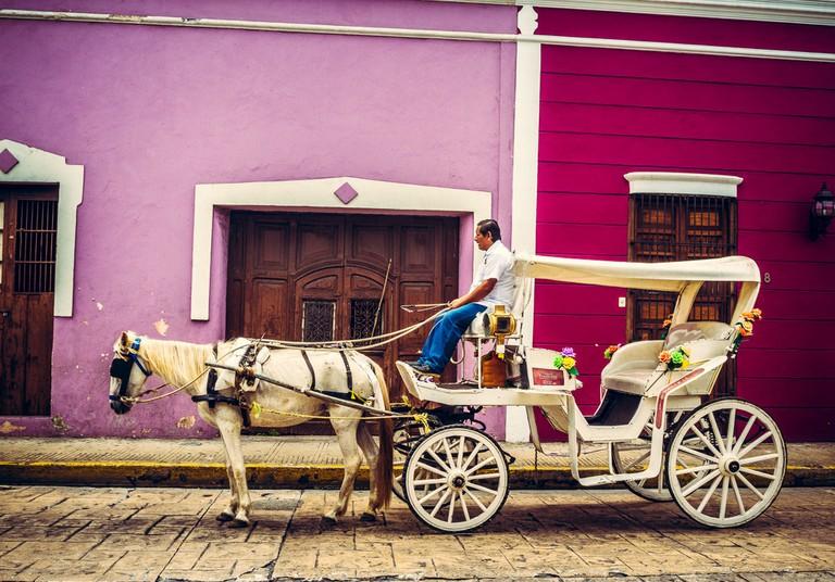 Purples in Mérida, Mexico