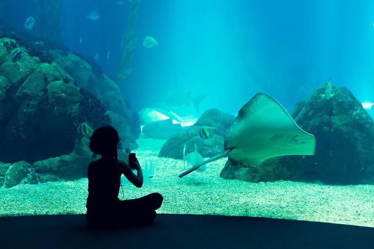 The Lisbon Oceanarium is the largest indoor oceanarium in Europe