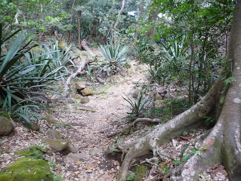 Rainforest path