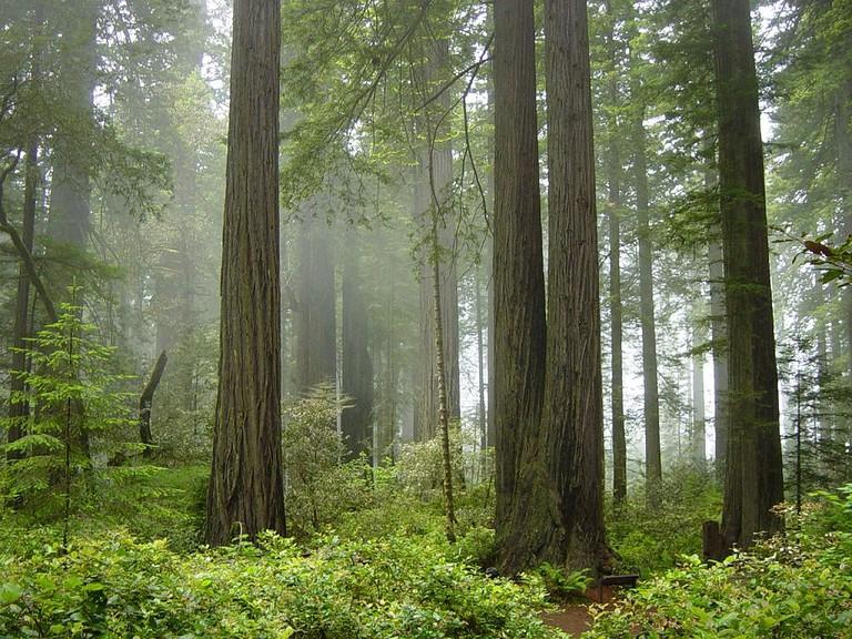 Redwood National Forest Park