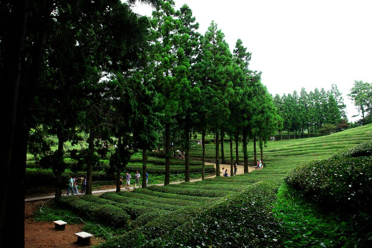 Walking paths through the plantations feature groves of cedar, bamboo, maple and cypress trees