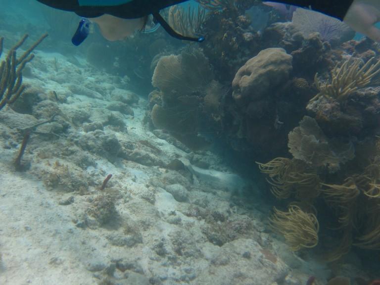 Scuba diving in Vieques, Puerto Rico