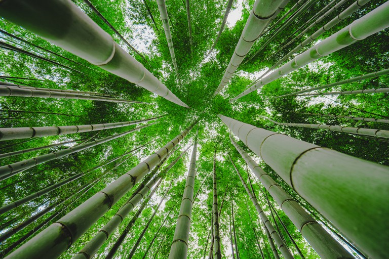 Looking up in a bamboo forest   © aotaro / Flickr