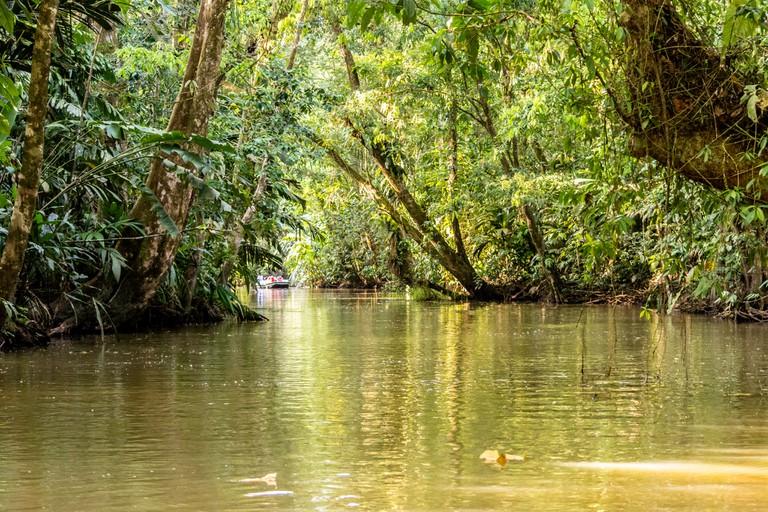 Tortuguero mangroves in Costa Rica | © dconvertini / Flickr