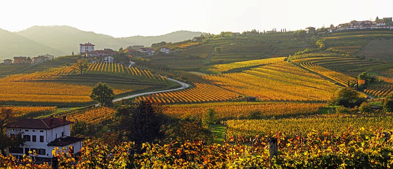 Vineyards in Slovenia│