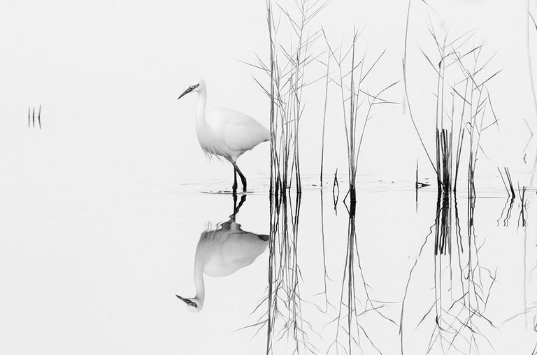 Zhecho Planinski captures stories that happen in an instant