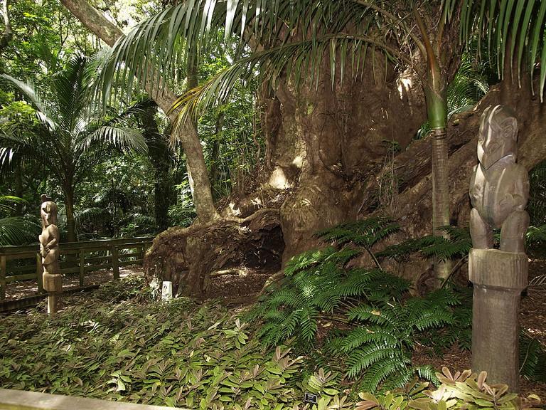 Puriri Burial Tree, Hukutaia Domain, Opotiki