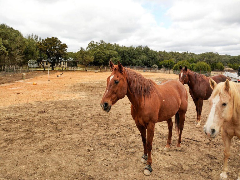 Perfect for horses, 11 acres in the Hill Country