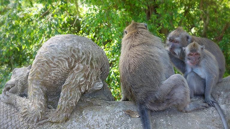 Ubud Monkey Forest | © Farley Roland Endeman