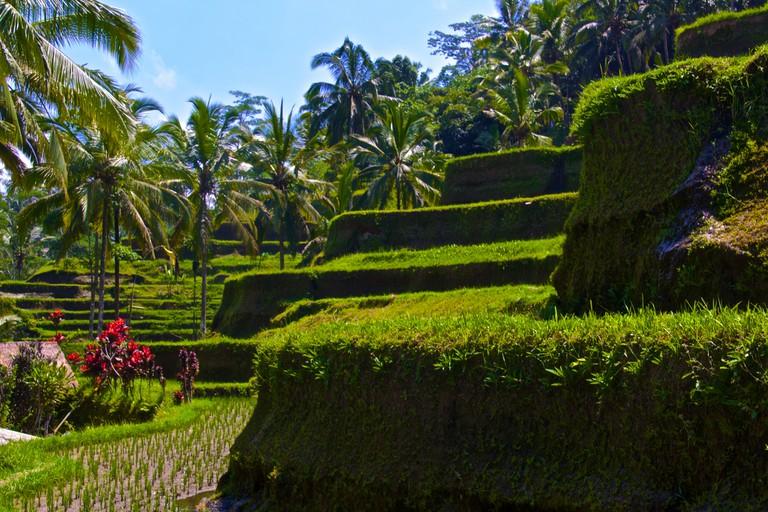 Tegalalang Rice Terraces | © Aussie Assault