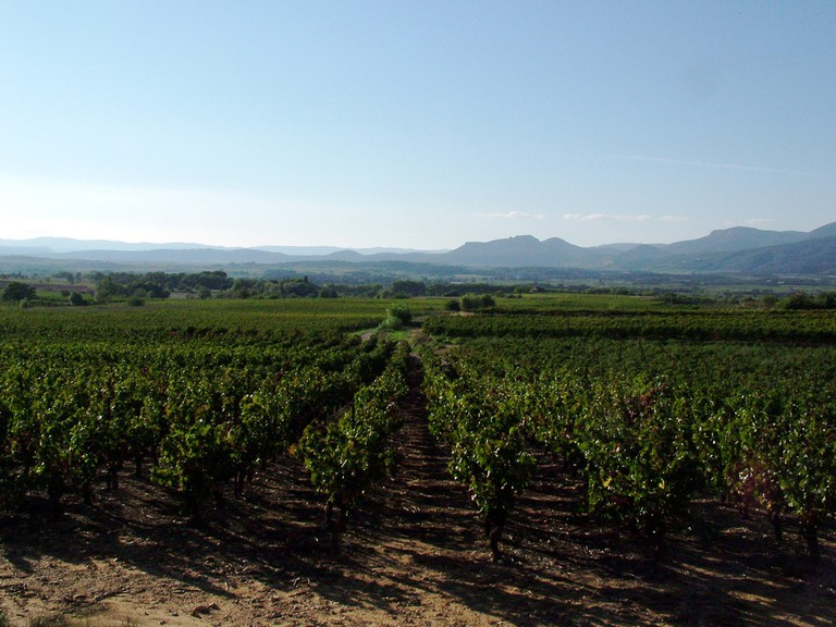 Languedoc Vineyards | © Tara Hunt / Flickr