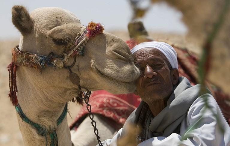camel bosa
