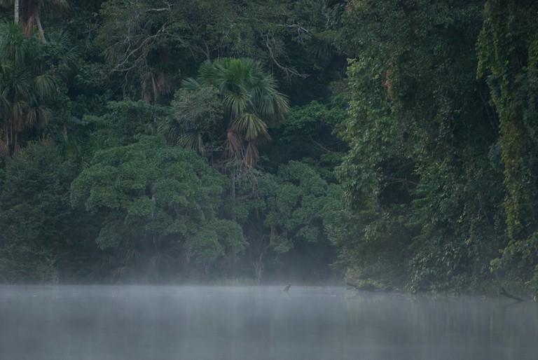 Beni rainforest