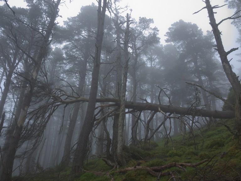 Wild Woods, Cairngorms