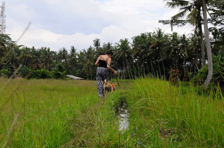 Walking a rescue through the rice paddies | © Nikki Vargas
