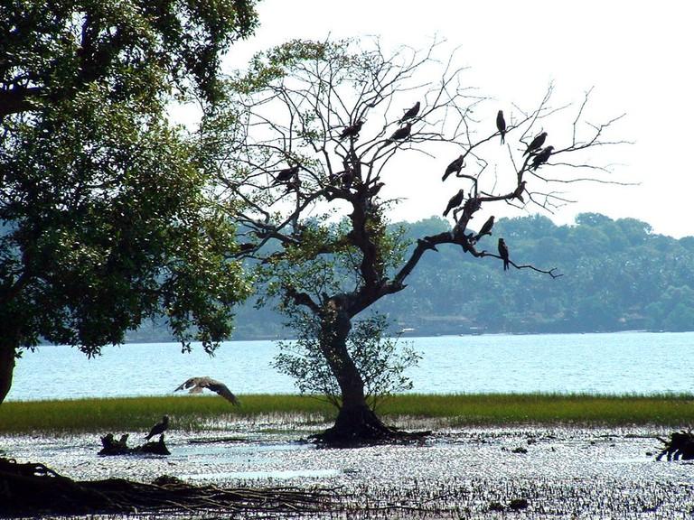 Bird Sanctuary Goa