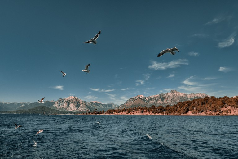 Birds in flight over Lake Nahuel Huapi