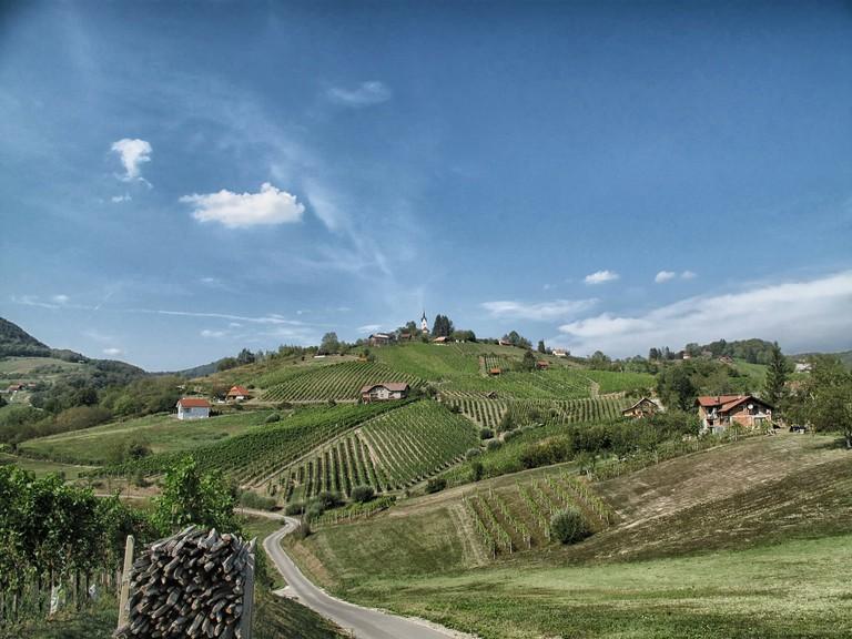 Vineyards in Bizeljsko│