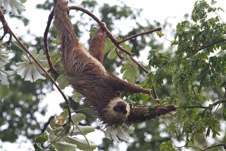Sloths drying out | © Brian Gratwicke / Flickr