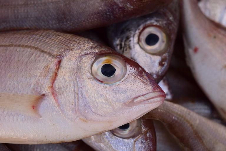 "<a href=""https://pixabay.com/en/fish-frisch-fish-market-market-1608211/"">Fish fresh from the sea | © ulleo/Pixabay</a>"