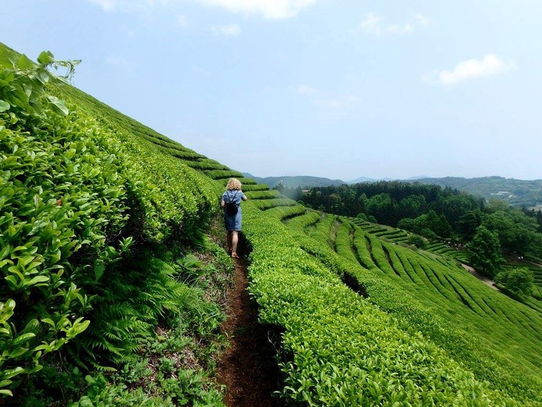 Alone time in the Boseong Tea Fields, South Korea